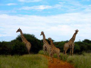 luxury hunting safari