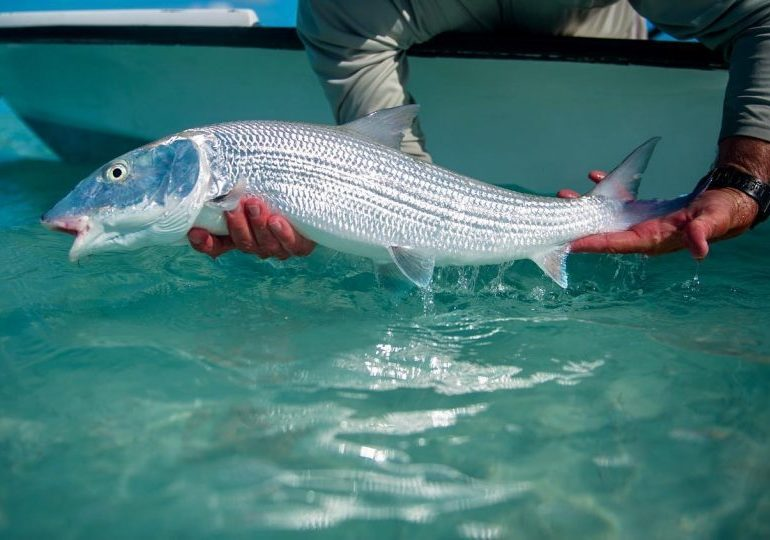Bahamas Bonefishing Lodge - Andros