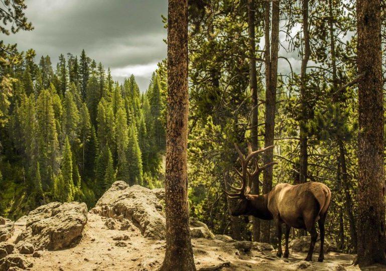 Montana Elk Hunting Lodge – Bozeman