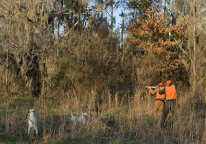 Alabama Quail Hunt - Davis Quail
