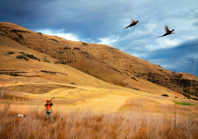 Idaho Luxury Wingshooting