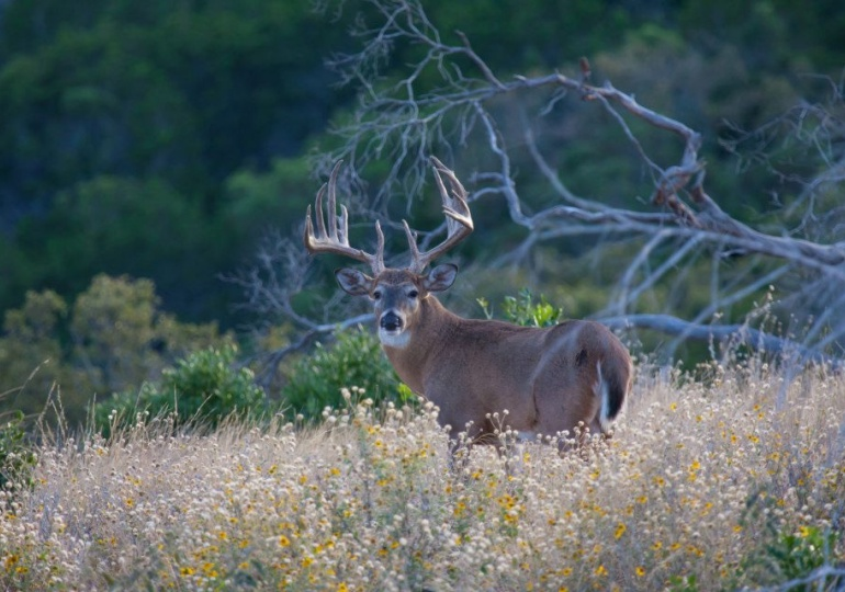 Texas Whitetail Hunting Lodge - Kerrville