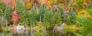 Quebec Luxury Red Stag Hunting & Elk