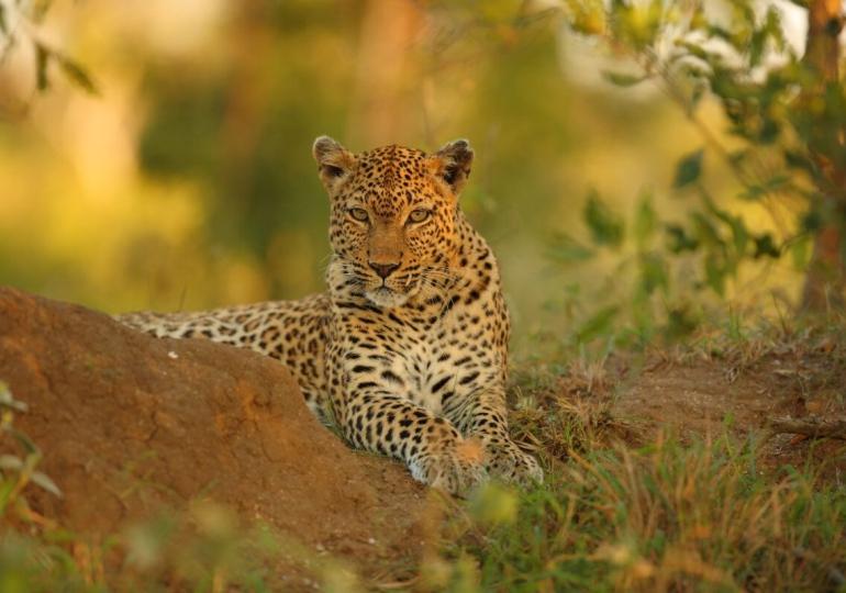 South Africa Kruger Park Photo Safari