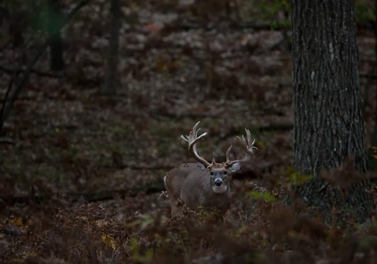 Michigan Luxury Whitetail Hunt
