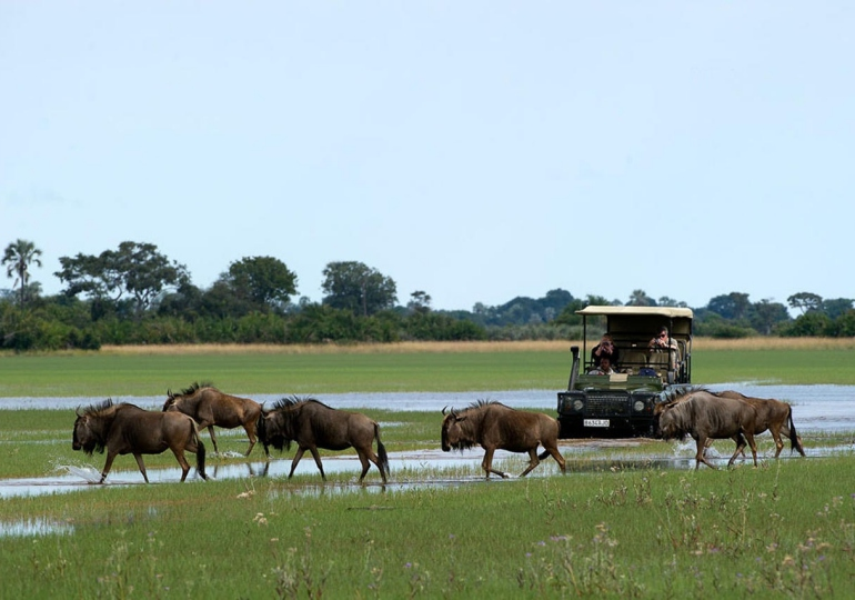 Victoria Falls to Okavango Delta