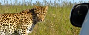 Cape Town Kruger photo safari