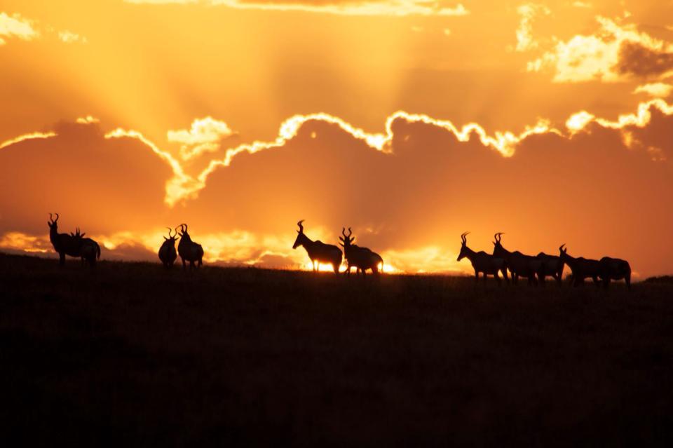 South Africa Luxury Hunting Safari - Eastern Cape