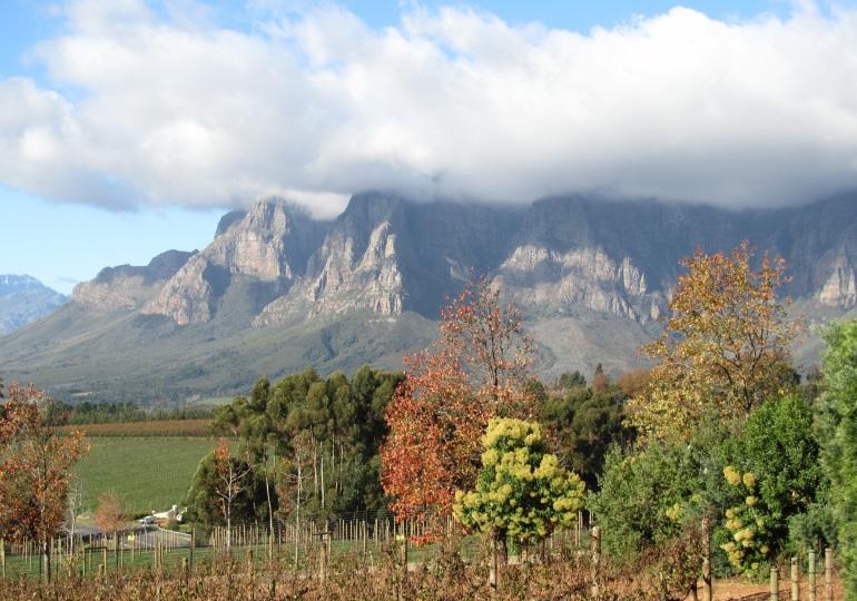 Cape Town Luxury Safari