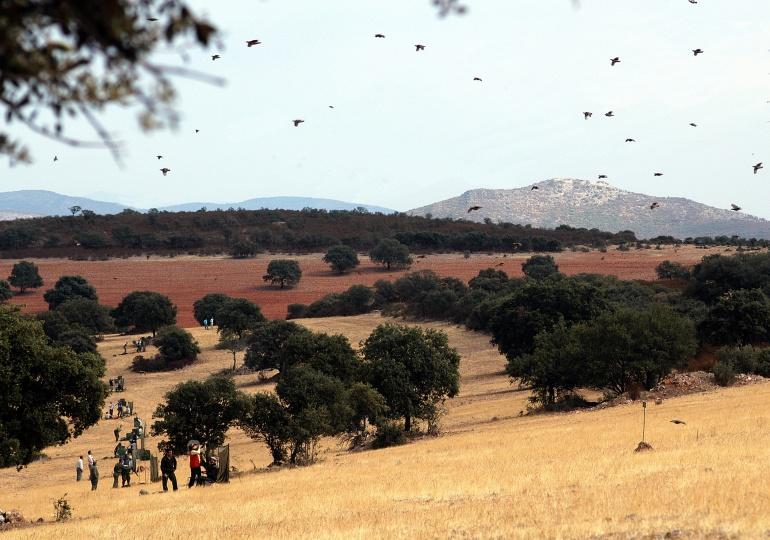 Spanish Driven Bird Hunt