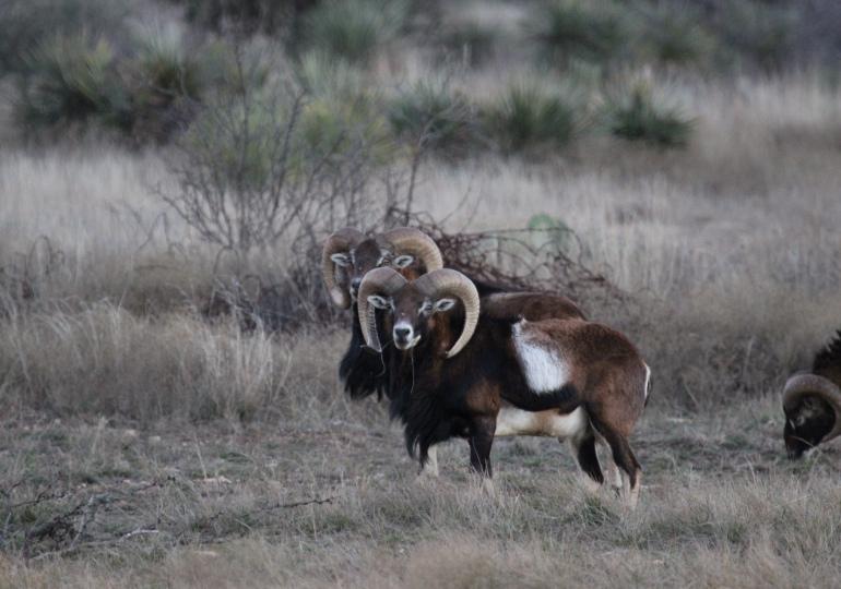 Texas Luxury Hunting Lodge - Brownwood