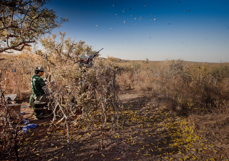 Argentina Luxury Dove Hunt