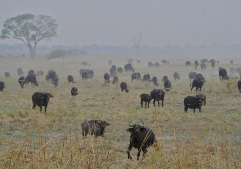 Namibia Hunting Safari - Caprivi Strip