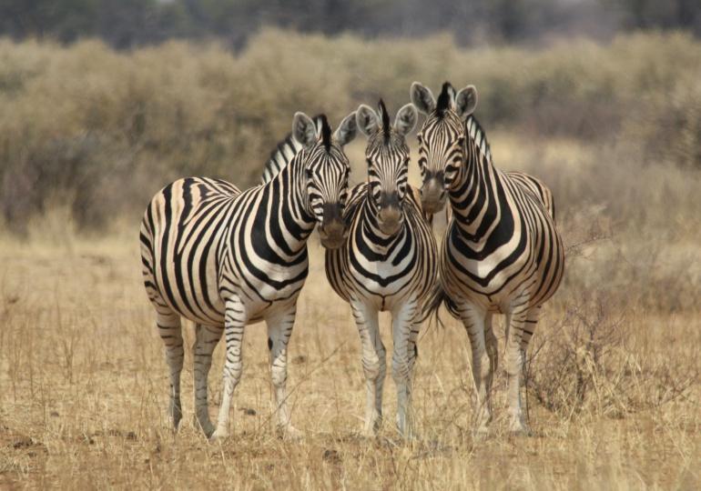Namibia Hunting Safari - Kalahari Desert