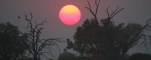 Namibia African Hunting Safari Caprivi Strip