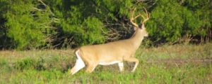 Southwest - Private Family Hunting Ranches for Whitetail, Elk, Mule Deer, Pronghorn, Aoudad