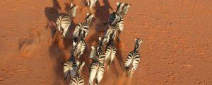 South Africa Luxury Hunting Safari