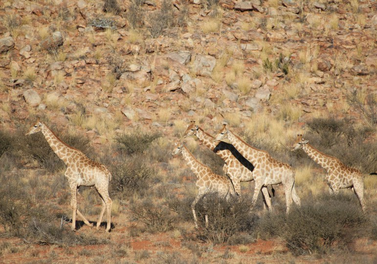 South Africa Luxury Hunting Safari - Northern Cape
