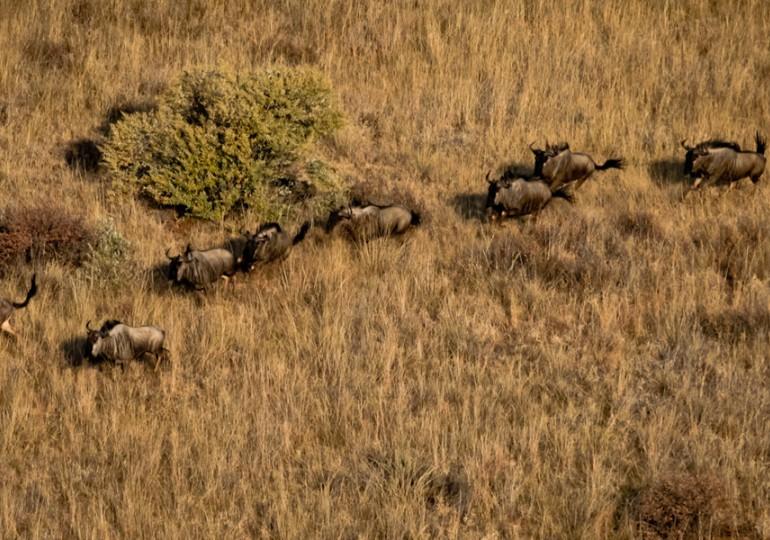 Namibia Family Hunting Safari