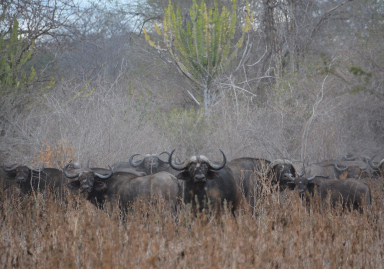 Mozambique Luxury Hunting Safari
