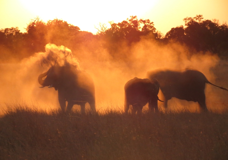 Zimbabwe Luxury Photo Safari