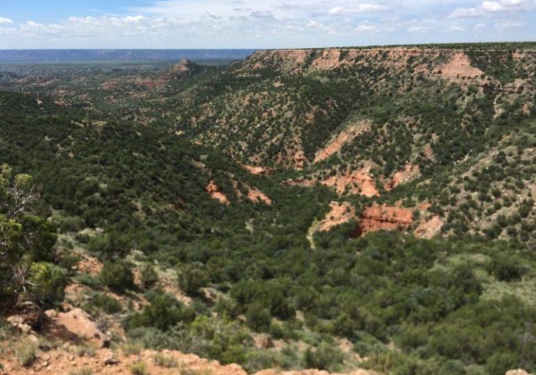 Texas Aoudad & Mule Deer Hunt – Palo Duro