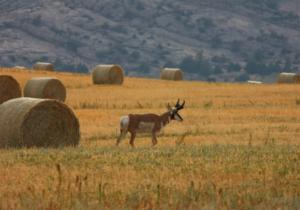 Wyoming Elk Hunt and Mule Deer Hunt3