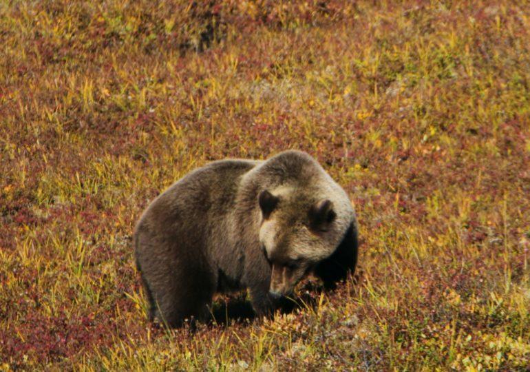 Denali National Park Touring