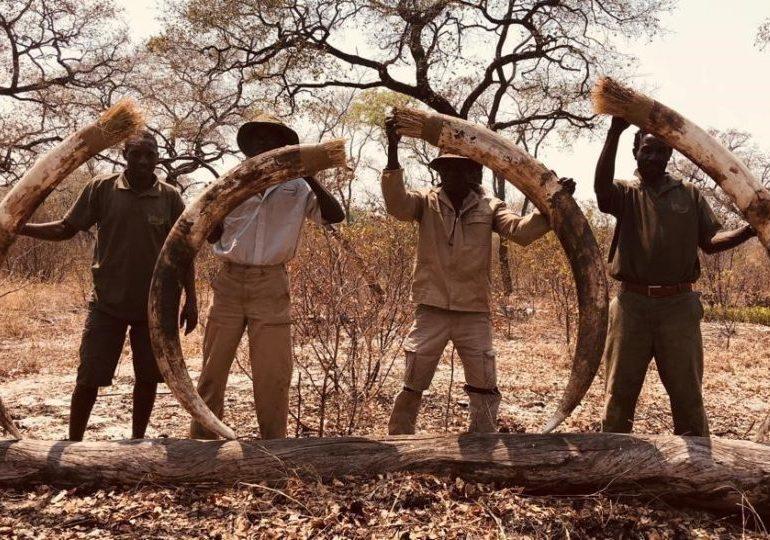 Namibia Dangerous Game Hunting